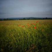 Cerkniško polje (foto: Ljoba Jenče)